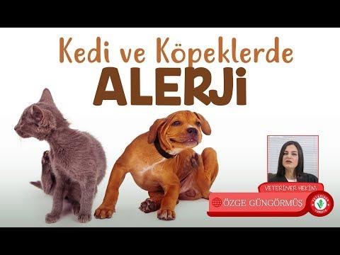 Kedi Ve Köpeklerde Alerji Nedir ? - Veteriner Hekim Özge Güngörmüş