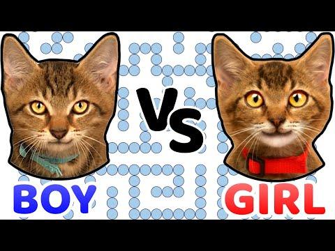 GIRL Vs BOY In WATER MAZE. Which Cat Kitten Is Smarter?