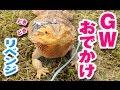 フトアゴヒゲトカゲ☆おちょこさんのGWおでかけ【Bearded Dragon】