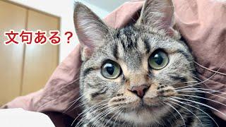 朝起きたばかりなのに飼い主を寝室に連行して二度寝を要求する子猫w