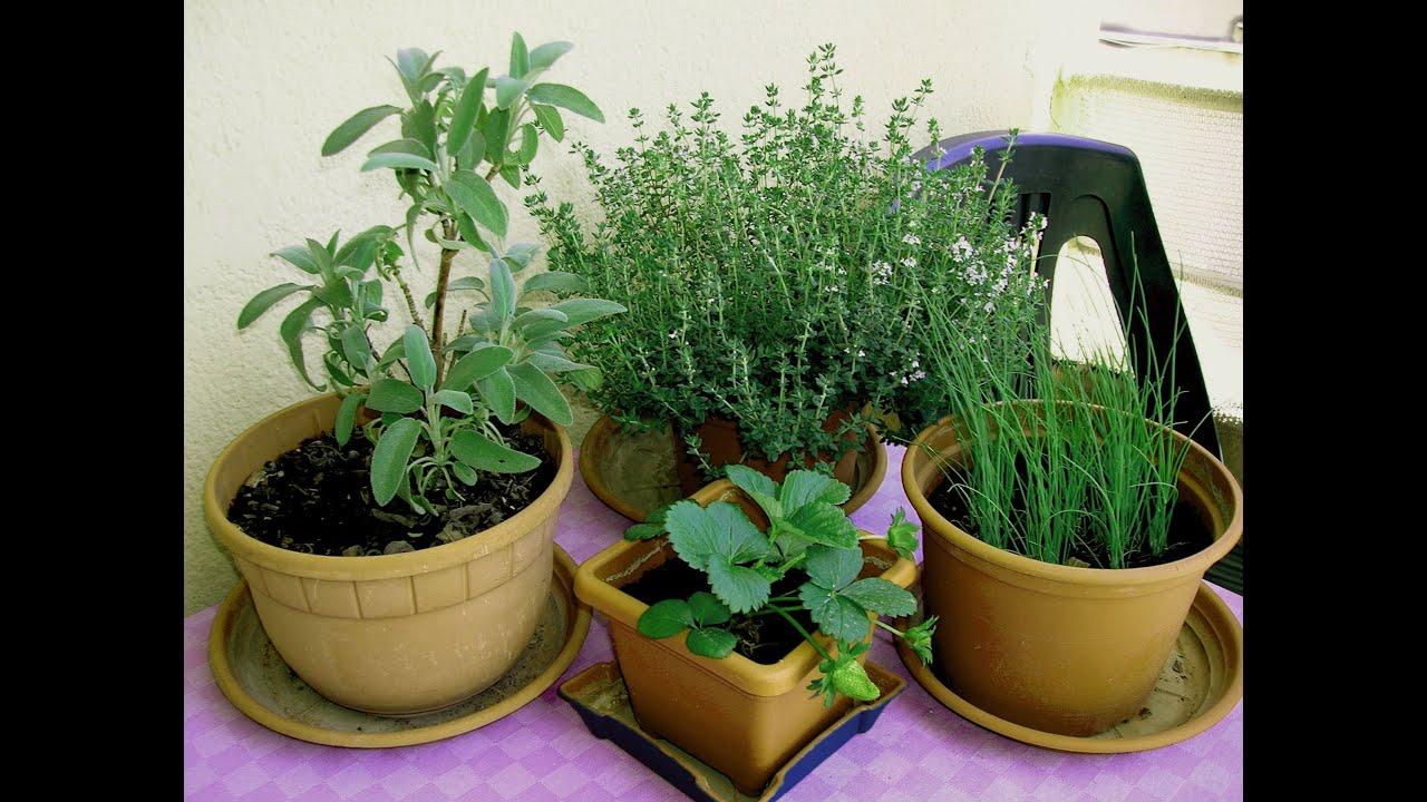 Coltivare In Casa Piante Aromatiche le mie piante aromatiche in balcone - orto in casa