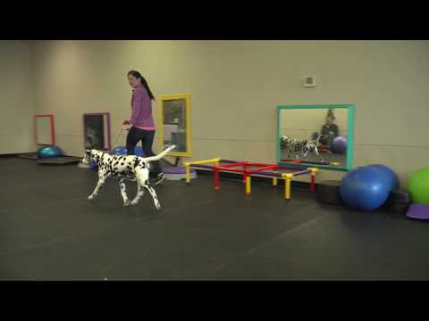Winning Dog Shows with Eric Salas Episode 1 of 5 Entering the ring