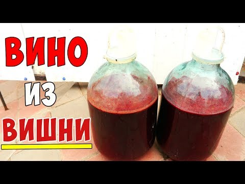 Вино из замороженной вишни в домашних условиях