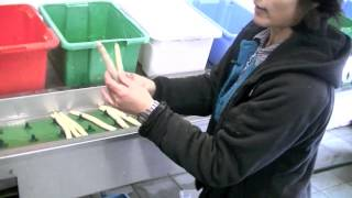 Hoe worden asperges geteeld?