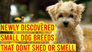10 Newly Discovered Small Dog Breeds That Don't Shed Or Smell
