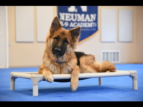 Scoot (German Shepherd Dog) Boot Camp Dog Training Demonstration