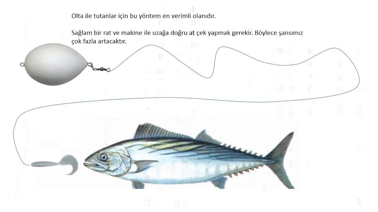 torik balığı nasıl avlanır ile ilgili görsel sonucu