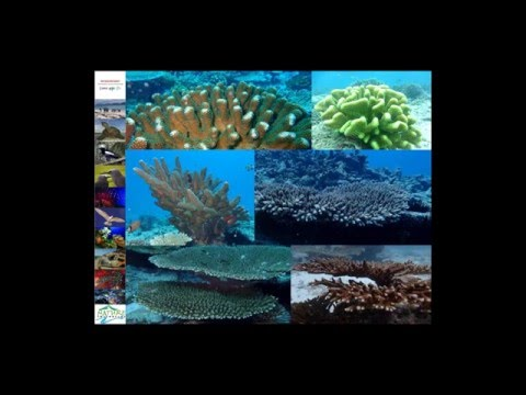 Reef Rescuers - Coral Gardening as an MPA Management Tool