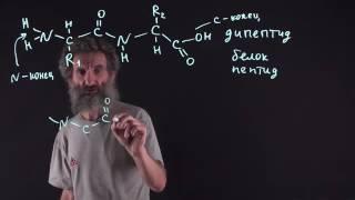 Цитология. Лекция 16. Белки и аминокислоты.