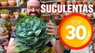 30 dicas de Cultivo de Suculentas
