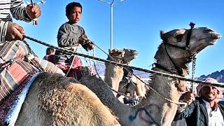 أطول سباق هجن للفتيان في مصر 12 كم 🇪🇬