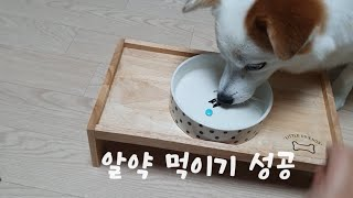 강아지 약 쉽게 먹이는 법