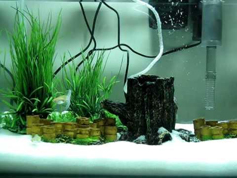 Guppy Fish In Beautiful Aquarium Setup 2 Avi Youtube