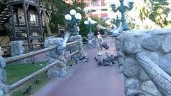 DESPERATE BIRDS IN LAUGHLIN NEVADA