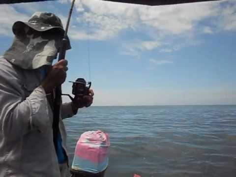 ikan jenahak tg karang