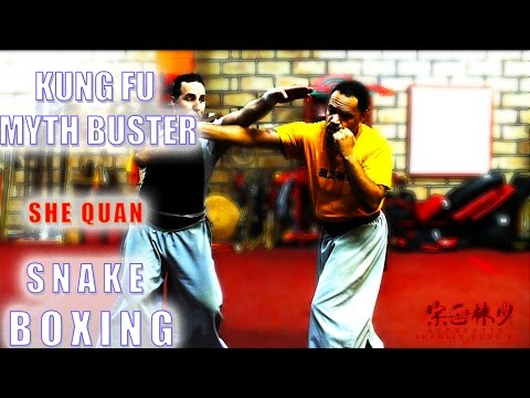 Kung Fu Myth Buster!! How To Apply Snake Boxing!!