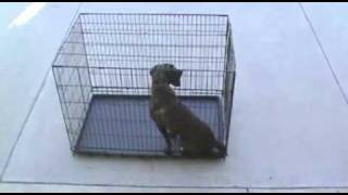 Dog Kennel Wire Crates, K9kennelstore.com 1 -877-527-3455