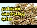 Benefits of Lentils and it's source || தானியங்களில் என்ன இருக்கிறது தெரியுமா - Tam