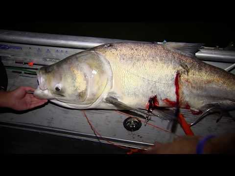 Bowfishing on the Ohio River