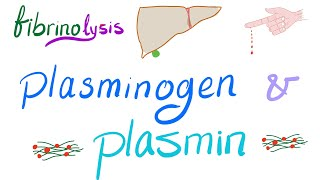 Plasminogen and Plasmin (Fibrinolysis)