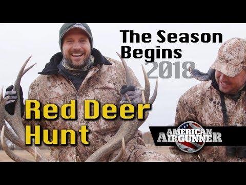 Airgun Hunting Umarex Hammer Air Rifle Red Deer : American Airgunner TV