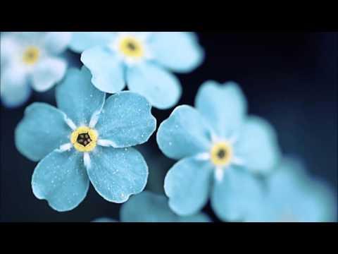 Enya Caribbean blue - lyrics