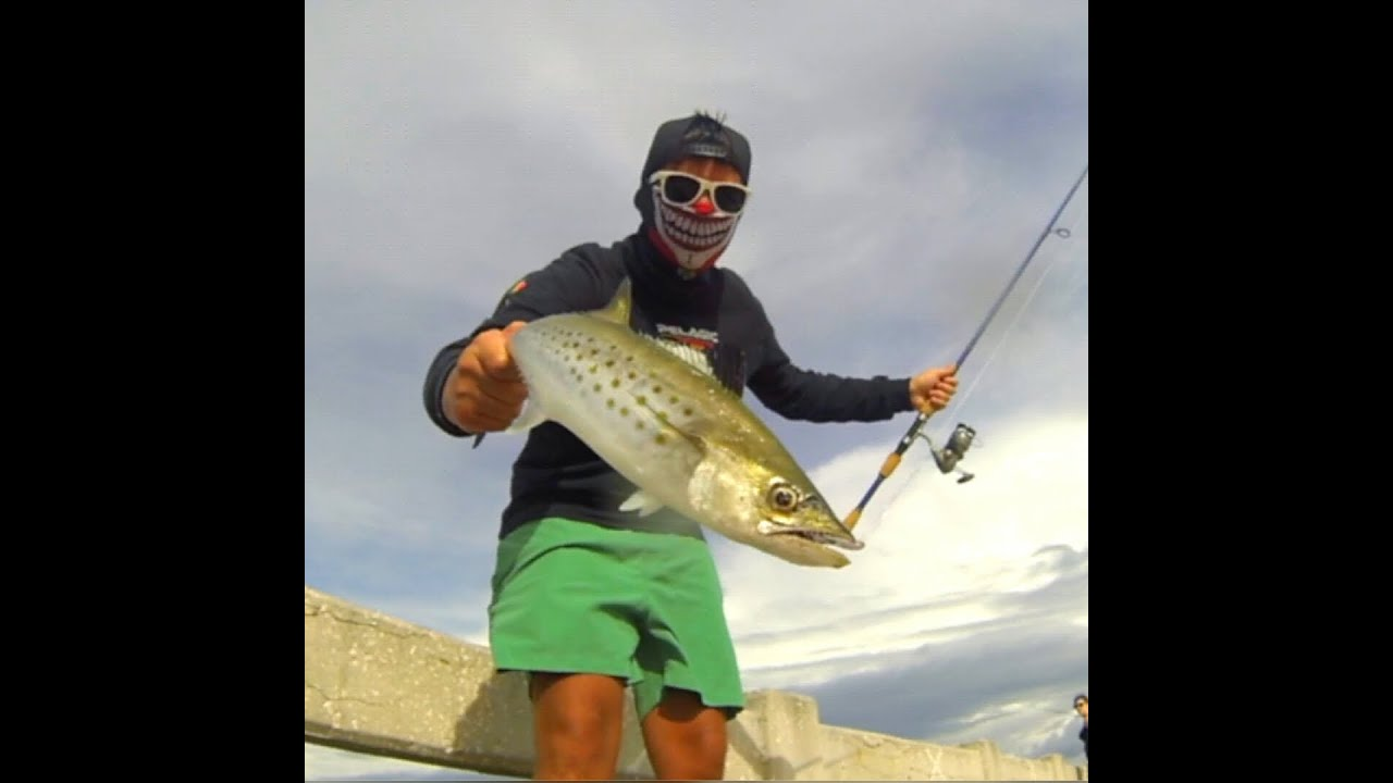 Extreme spanish mackerel fishing from the skyway fishing for Skyway fishing report