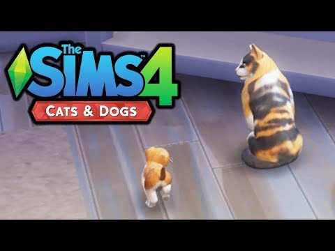 Adopting a Kitten! - The Sims 4 Cats and Dogs - Part 2