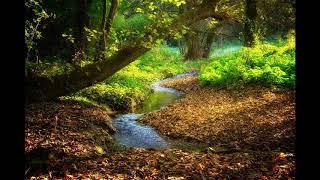 Звуки природы и шум лесного ручья. Без рекламы.