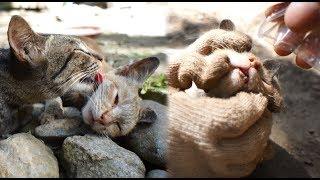 【NEW】https://youtu.be/HuRS6ncR3KM オレンジ猫の様子がおかしいです...