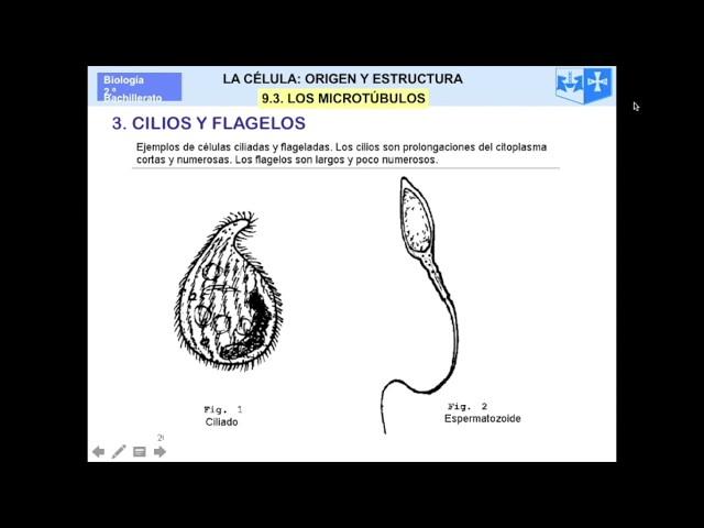Organulos celulares_Conceptos clave