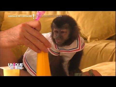 J'ai un singe comme animal de compagnie