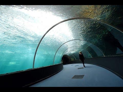 Boulogne-sur-Mer : le plus grand aquarium d'Europe va ouvrir en mai à Nausicaà