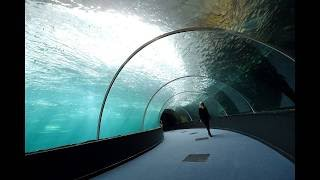 Boulogne-sur-Mer : le plus grand aquarium d'Europe va ouvrir à Nausicaà