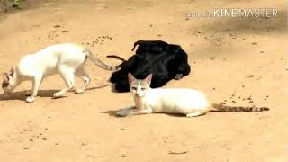 Cat and gote Funny movement    cat cupple cute look