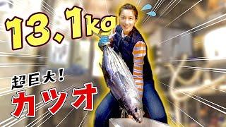 【13.1kg】通常サイズの約3倍❗️超巨大なカツオを捌いて日本酒にピッタリな一品に♪