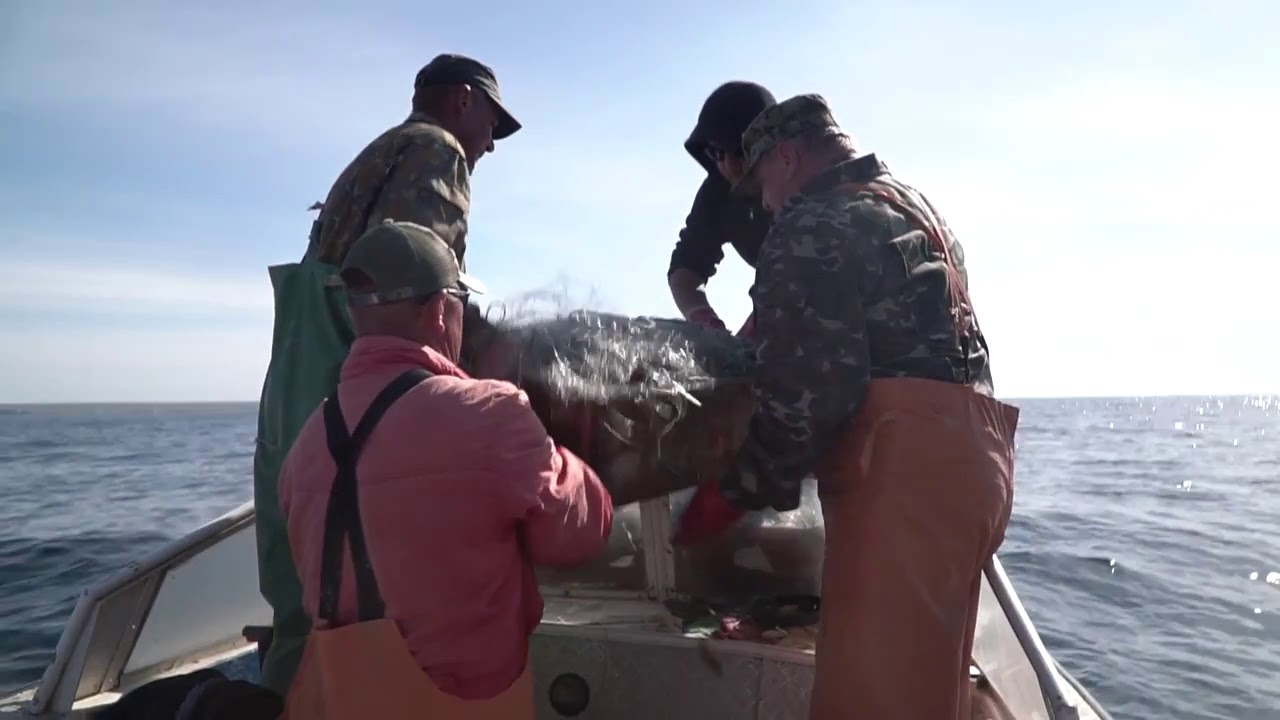 Профессия – рыбак: Как добывают камбалу-калкана у берегов Крымского полуострова