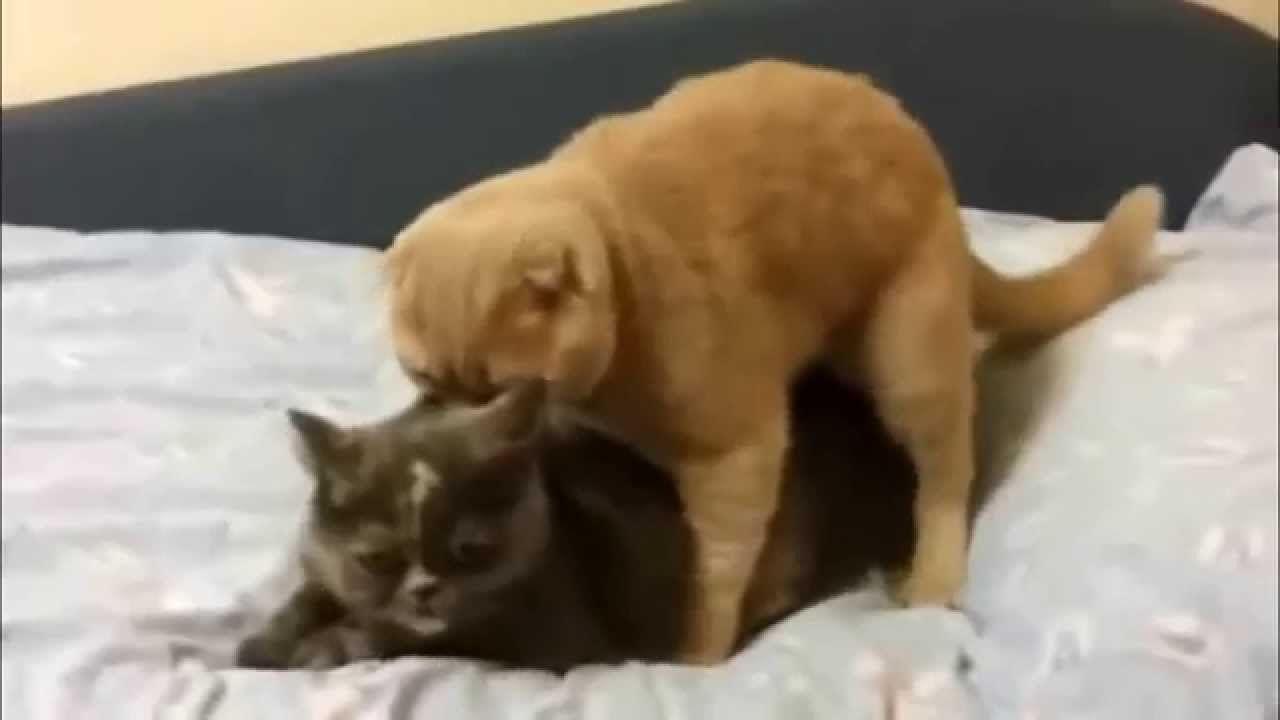 Cats Mating Screaming Like a Man - YouTube