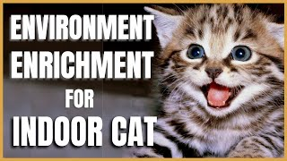 Cats 101 : Environmental Enrichment for Indoor Cats