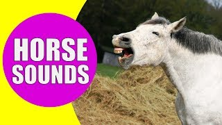 HORSE SOUNDS FOR KIDS - Learn Neighing, Snorting and Galloping Sound Effects of Horses