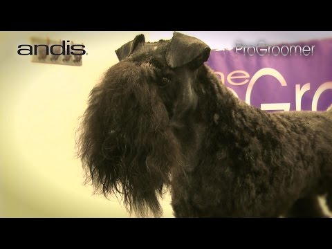 Grooming Guide - Kerry Blue Terrier Pet Trim - Pro Groomer