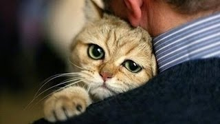 Коты и Кошки с любовью встречают хозяев * Katter elsker å møte eiere  Be