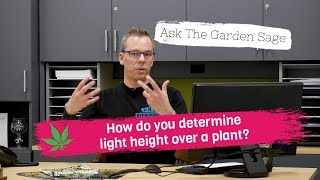 How do you determine light height over a plant