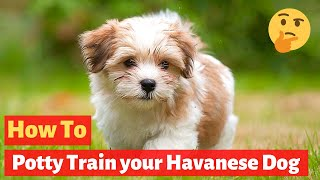 Havanese puppy Potty Training : Easy and Working Technique