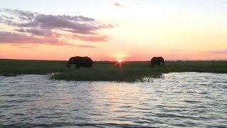 Botswana: une conférence pour sauver les éléphants
