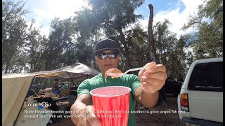 Sites are OPEN! Haẁaii Ohana Living at Bellows | Windward Oahu Camp with delicious food! - Lomi Oio