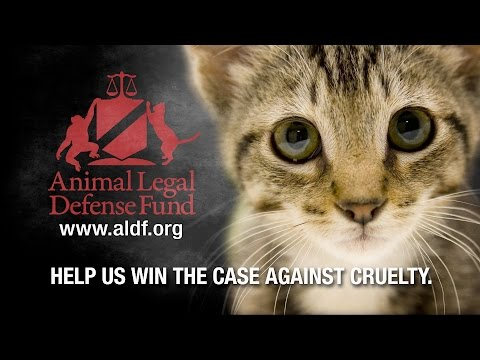 Animal Legal Defense Fund - Is This Who We Are?