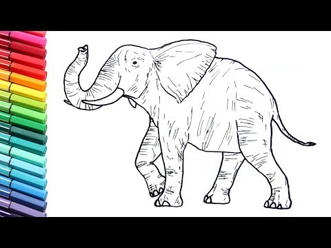 Drawing And Coloring a Elephant - Wild Animals Color Pages For Childrens