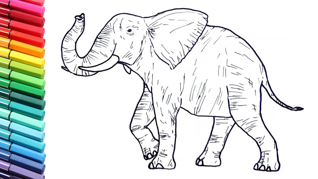Drawing And Coloring A Elephant Wild Animals Color Pages For - Coloring-pages-elephants