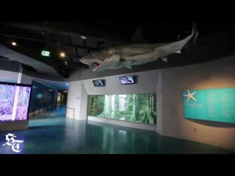Toledo Zoo Opens Renovated Aquarium Youtube